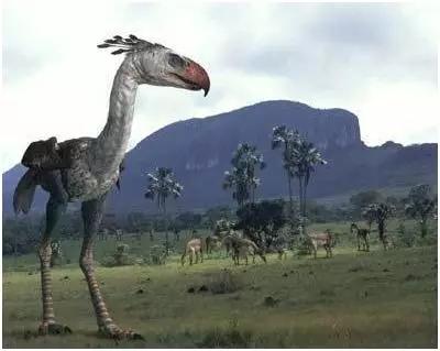 恐鸟,灭绝于1800年.jpg