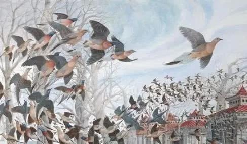 北美旅鸽,整整50亿只,被人类活活吃到灭绝.jpg